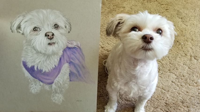 Drawing of dog Grace